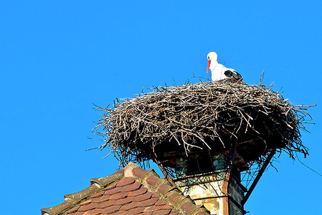 plugged-chimney-birds-nest